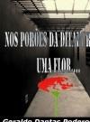 Nos Porões da Ditadura, uma Flor...